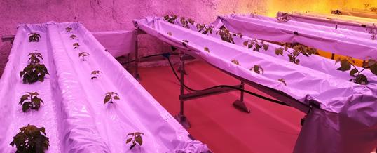 Pyhäjärvi Callio Underground Greenhouse -seminaari 21.3.2018